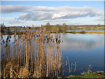 SE7170 : View towards Coneysthorpe by Pauline E