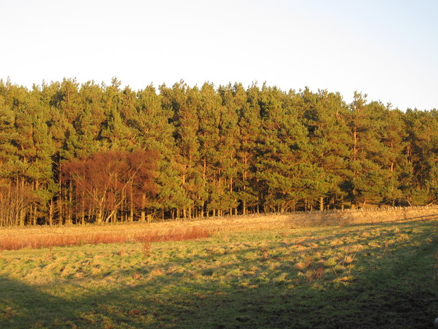 Greymare Hill Plantation
