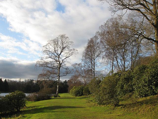 Winter trees, Castle Howard