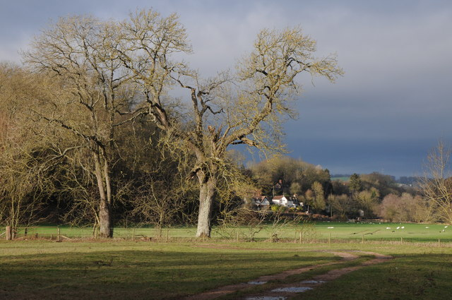 Trees beside the River Wye