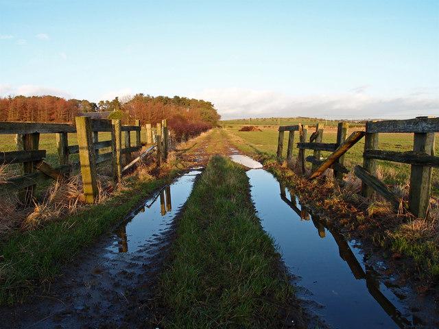 Track near Langlands