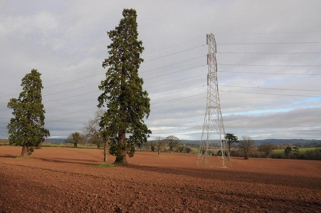Pine trees and a pylon