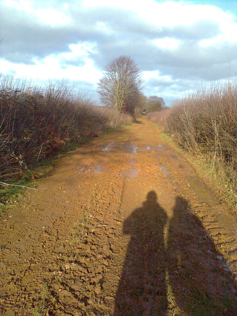 Ditchedge Lane: winter shadows