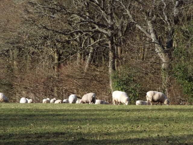 Grazing by Swan's Copse