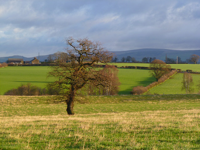 Pasture, St Cuthbert Without