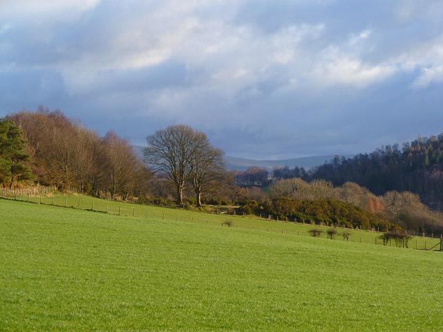 Pasture and woodland, Hesket