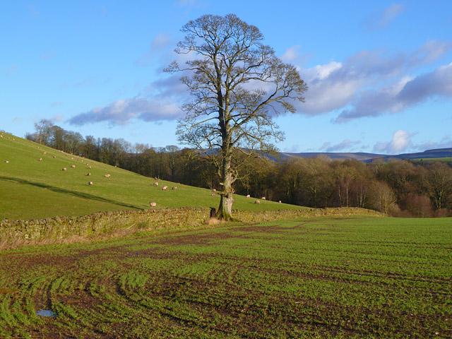 Farmland, Ainstable