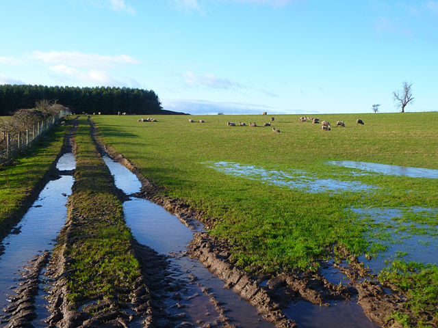 Pasture, Kirkoswald