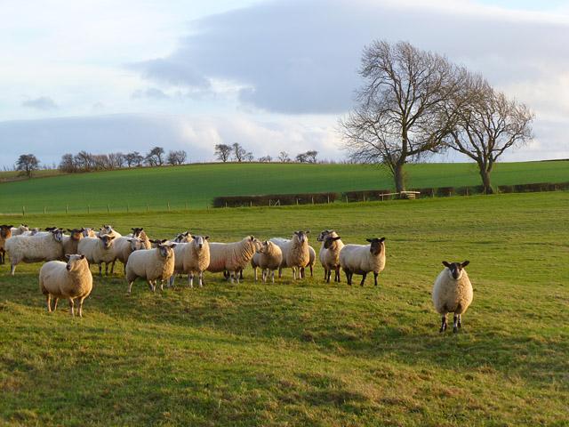 Pasture, Hutton Magna