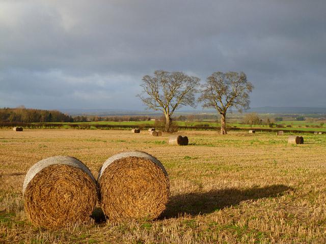 Farmland, Caldwell