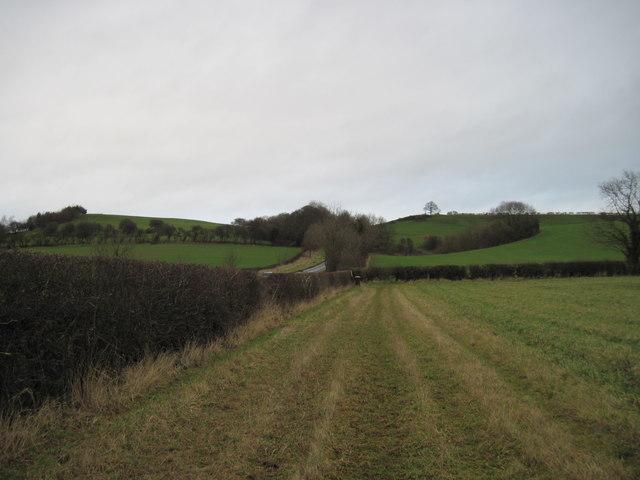 Field  Edge  Footpath  and  Terrington  South  Bank