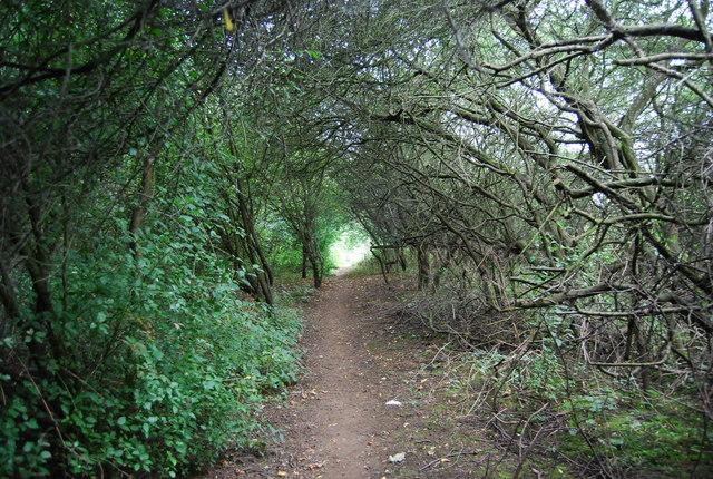 Tunnel of trees, MVW