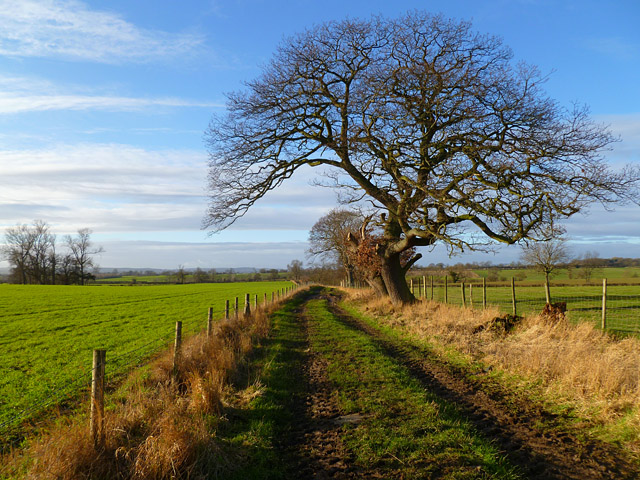 Bridleway and farmland, Uckerby