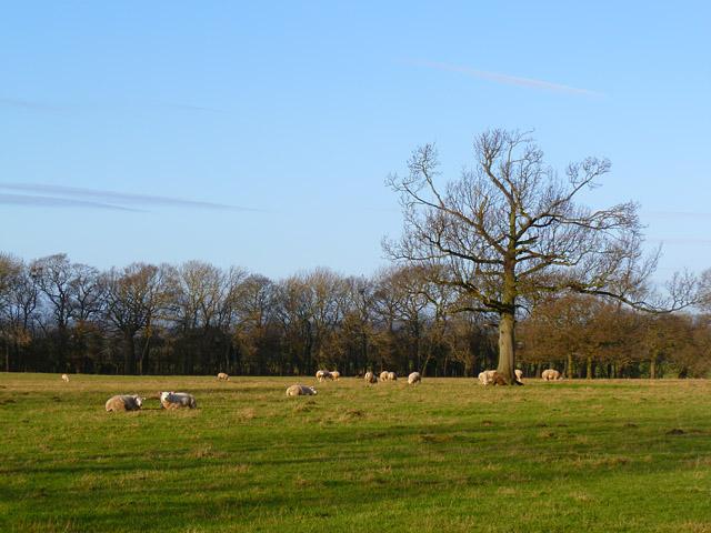 Pasture, Scorton