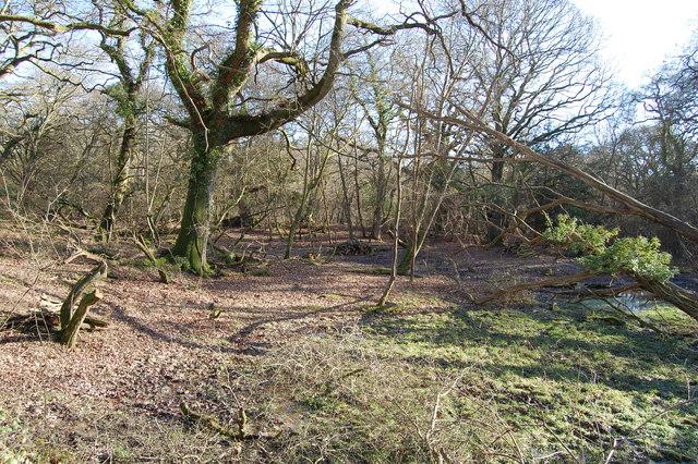 Old marlpit Brockenhurst