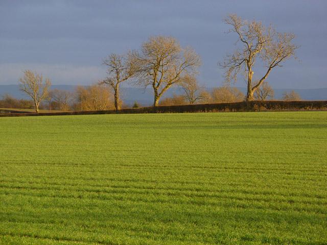Farmland, North Cowton