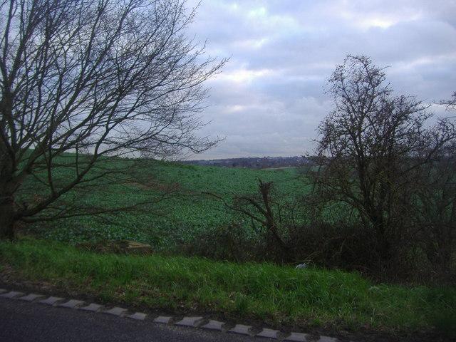 Fields by Hadley Road, Enfield