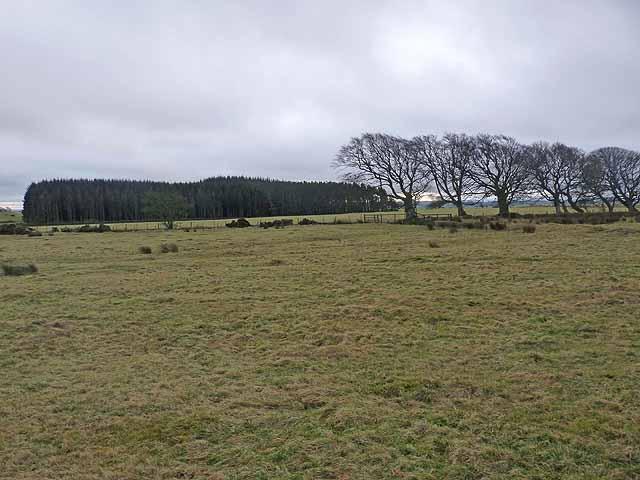 West Plantation