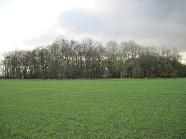 Brow  Wood  from  High  Lane