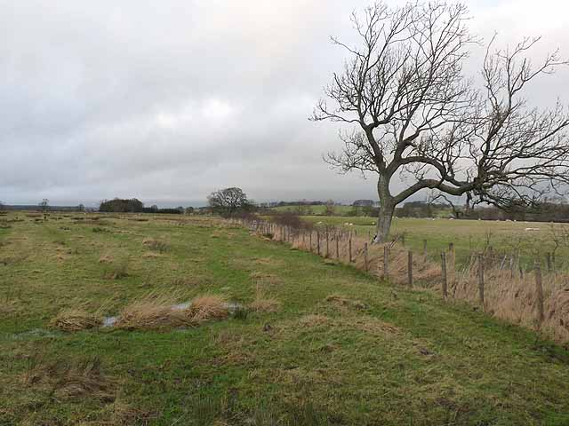 Field boundary near Holy Burn