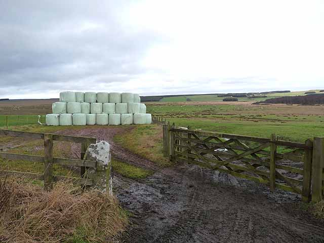 Silage bales near Gallows Hill Farm