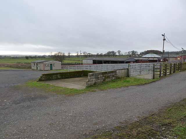 Cattle mart at Scots Gap