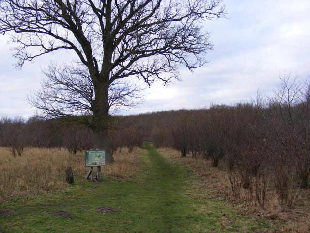 Path at Brakey Wood