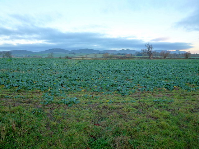 Rape crop and a view to the Malvern Hills