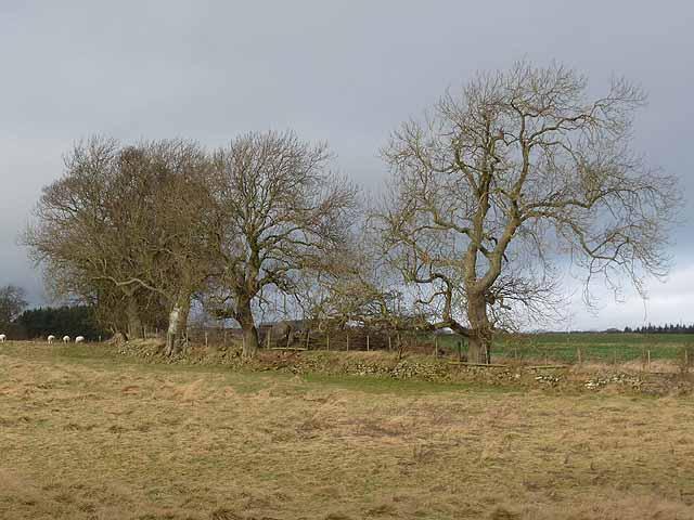 Field boundary near Middleton