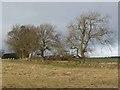 NZ0785 : Field boundary near Middleton by Oliver Dixon