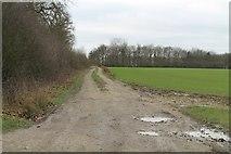 TF0841 : Track along Aswarby Thorns by J.Hannan-Briggs