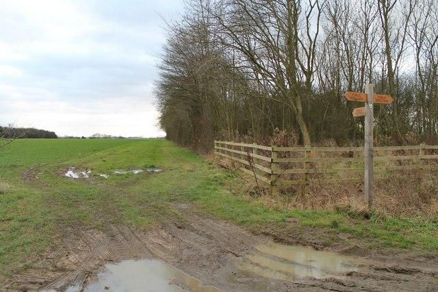 Muddy Paths