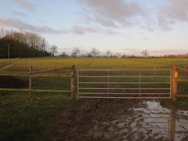 Horse paddock by Stonehills Farm