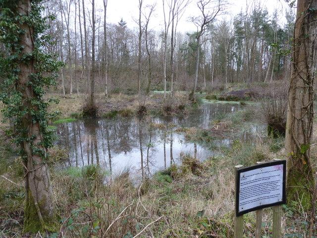 Ponds in Quarry Wood