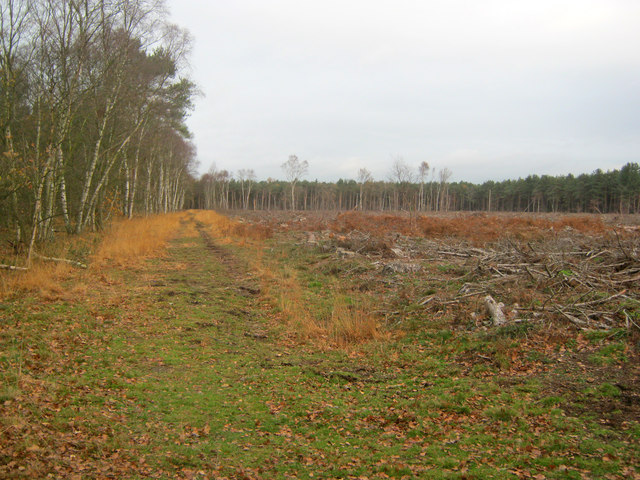Forest track on Stapleford Moor