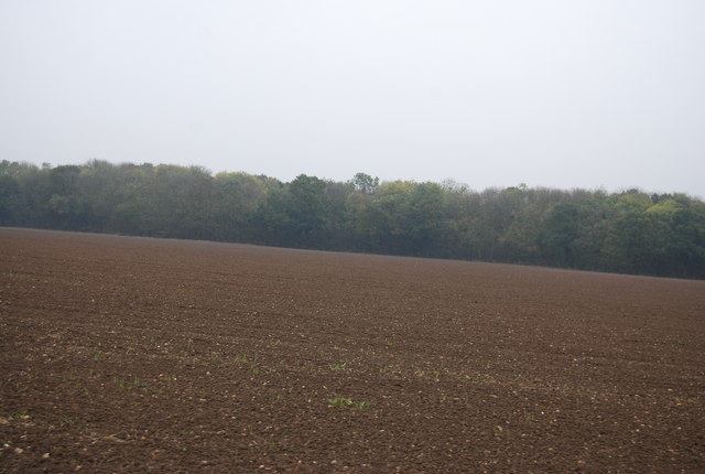 Fallow field and Convict's Wood