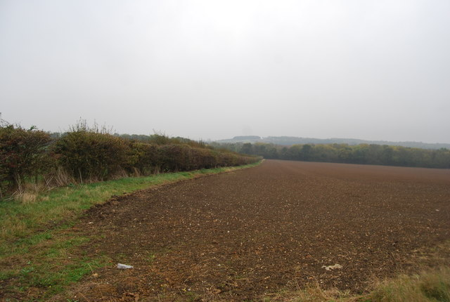 Fallow field and hedgerow