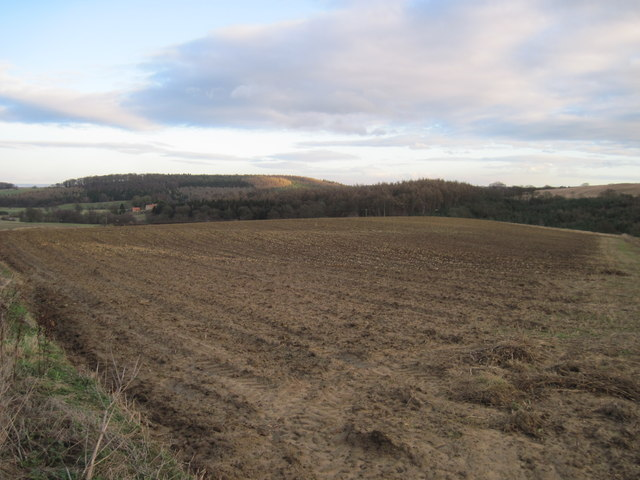 Over  the  field  to  Soulby  Wood