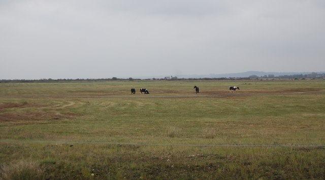 Horses on Cliffe Marshes