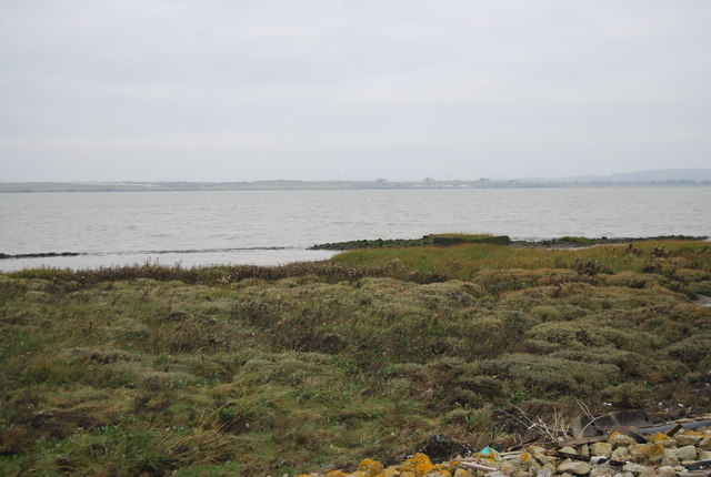 Salt marsh, Thames Estuary