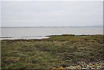 TQ7178 : Salt marsh, Thames Estuary by N Chadwick