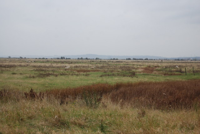 Grazing marshes