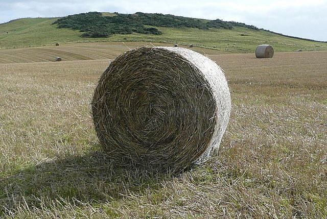 Crop at Cliff Farm
