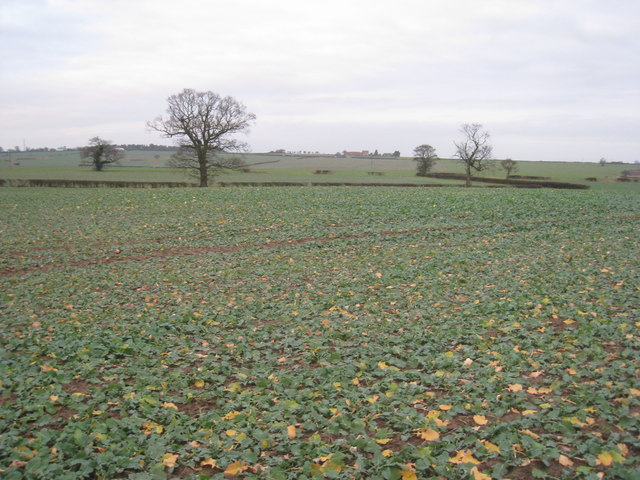 View towards Gringley Grange