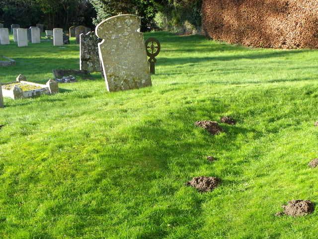 Molehills, St George's Churchyard