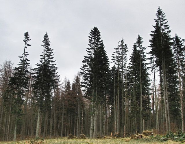 Hilton Wood