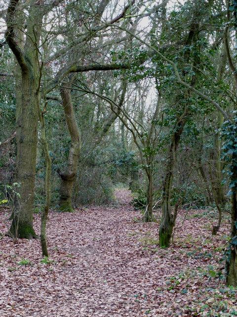 Public Woodland?