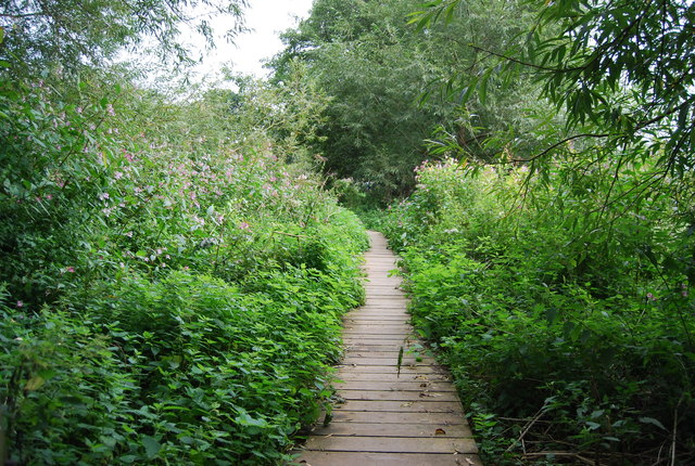 Boardwalk by the Medway