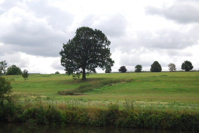 A single tree by the River Medway