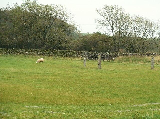 The edge of the Wickerman field